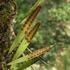 Flora silvestre de Bogotá icon
